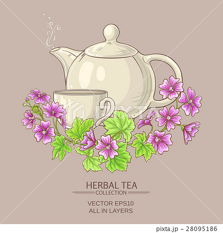 malva tea illustration 28095186