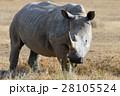 動物 アフリカ アフリカ大陸の写真 28105524