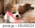 リラックスする犬 28109224