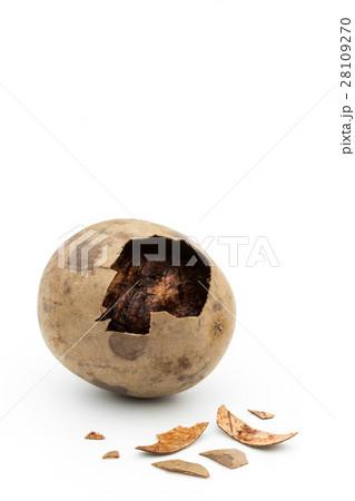 ラカンカ(羅漢果): luo han guo (monk fruit) 28109270