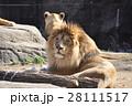 ライオン 28111517