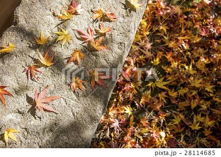 石の上の紅葉の落ち葉 28114685
