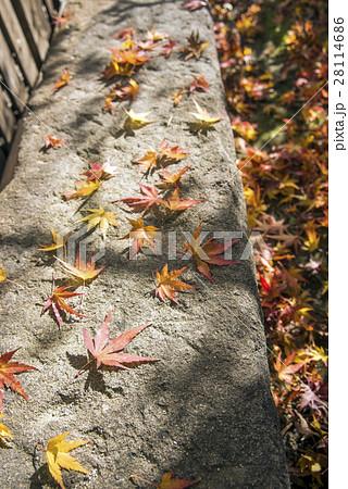 石の上の紅葉の落ち葉 28114686