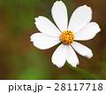 花 フラワー お花の写真 28117718