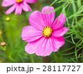 花 フラワー お花の写真 28117727