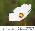 花 フラワー お花の写真 28117737