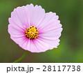花 フラワー お花の写真 28117738