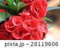 冠 王冠 お花の写真 28119606
