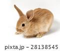 ウサギ 28138545