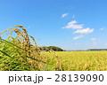 青空 秋晴れ 田んぼの写真 28139090