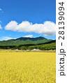 青空 秋晴れ 田んぼの写真 28139094