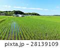 青空 田んぼ 水田の写真 28139109