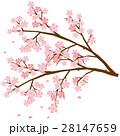 桜 枝 ベクターのイラスト 28147659