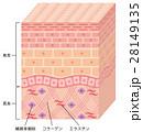 皮膚 構造 断面図のイラスト 28149135