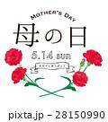 母の日 カーネーション 花のイラスト 28150990