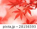 秋 紅葉 もみじの写真 28156393