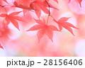 秋 紅葉 もみじの写真 28156406