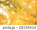 秋 紅葉 もみじの写真 28156414