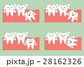 親不知 智歯 歯のイラスト 28162326