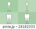 歯 種類 もんしのイラスト 28162333