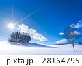 【美瑛】北海道 マイルドセブンの丘 28164795