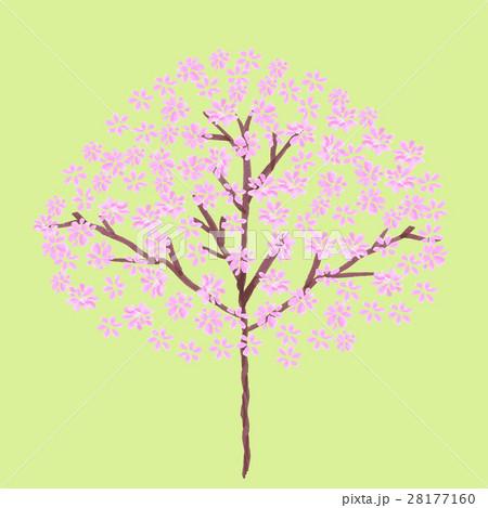 桜の背景 28177160