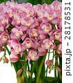 シンビジューム 洋蘭 花の写真 28178531
