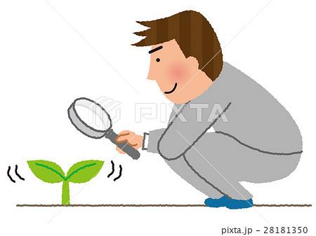 植物を観察する男性社員 28181350