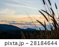 黄昏 日没 夕暮れの写真 28184644