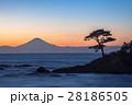 富士山と松の木 28186505
