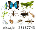 Different types of insects on white background 28187743