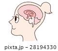 横顔 女性 脳のイラスト 28194330