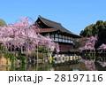 京都 平安神宮 神苑の桜 28197116