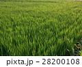 田んぼの風景 28200108
