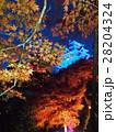 11月岐阜 郡上八幡城・天守ブルーライトアップと紅葉 28204324