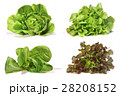 Set with lettuce salad on white background. 28208152