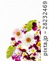 フラワー 花 パンジーの写真 28232469