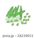 そら豆 <ひとまとまりの野菜> 28239653