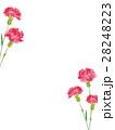 カーネーション 水彩 花のイラスト 28248223