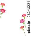 カーネーション 水彩 花のイラスト 28248224
