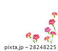 カーネーション 水彩 花のイラスト 28248225