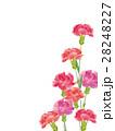 カーネーション 水彩 花のイラスト 28248227