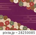 菊 菊の花 和柄のイラスト 28250085