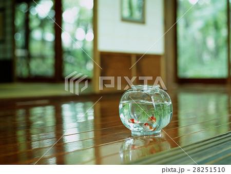 金魚鉢の写真素材 [28251510] - PIXTA