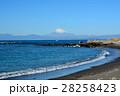 葉山海岸より望む富士山 28258423