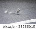 野鳥4 28266015
