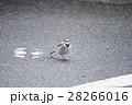 野鳥5 28266016