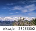 残雪の後立山連峰(長野県) 28266602