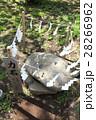 江島神社奥津宮 力石 28266962