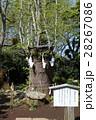 江島神社奥津宮 亀石 28267086